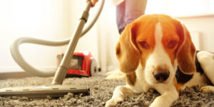 Best-Spot-Carpet-Cleaner-for-Pet-Stains