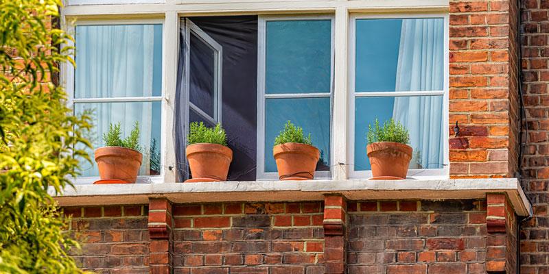 Houseplants-Outside